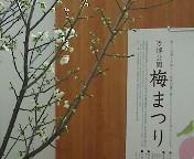 image/hazel-2006-02-25T14:53:17-1.jpg